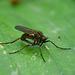 Pretty little Fly