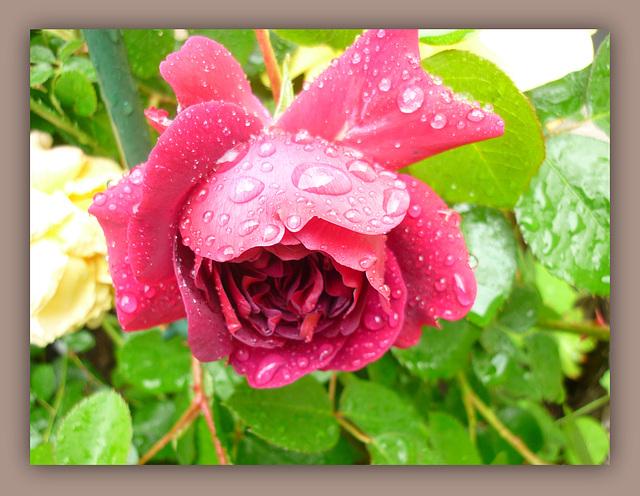 Sous la pluie !!!!