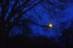 Luno surbranĉa (suspekta hela objekto)