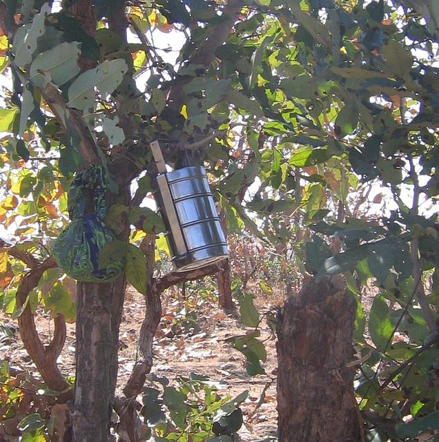 Tiffin on tree