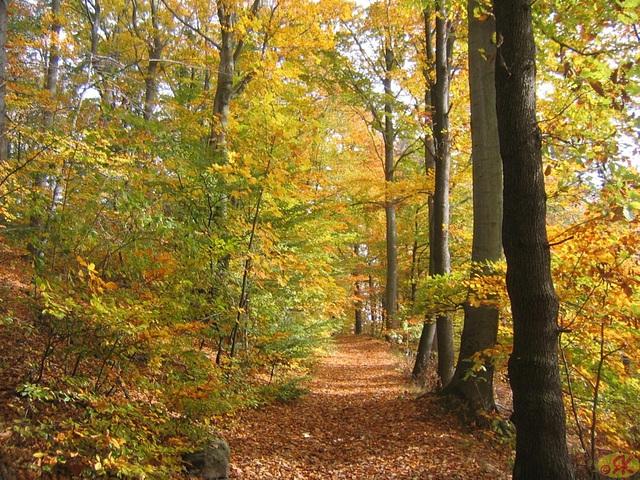 2008-10-19 30 Wandertruppe, Weissig - Heidenau