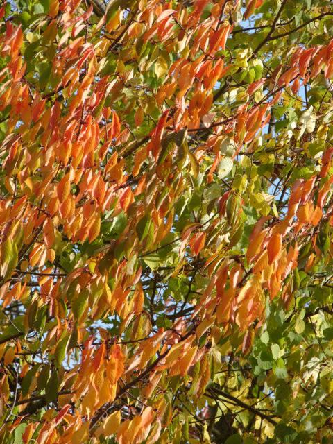 automne 011