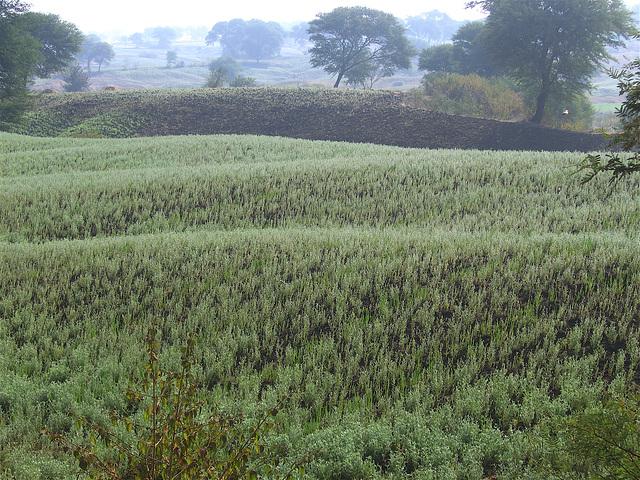 A field in Chhattisgarh