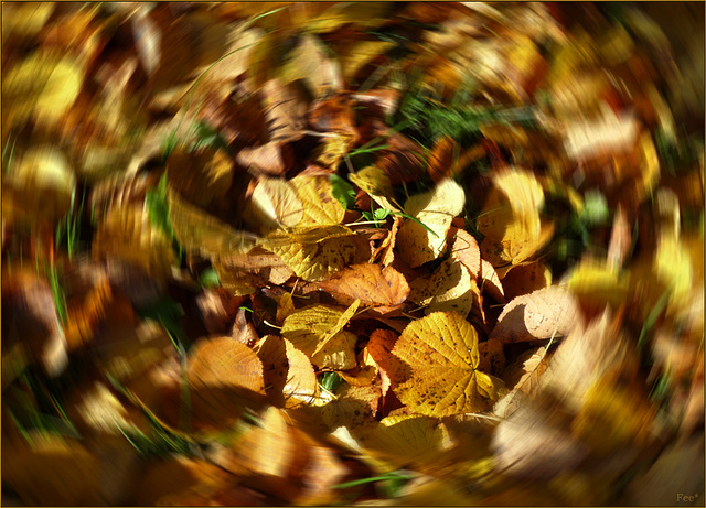 Bunter Herbstreigen