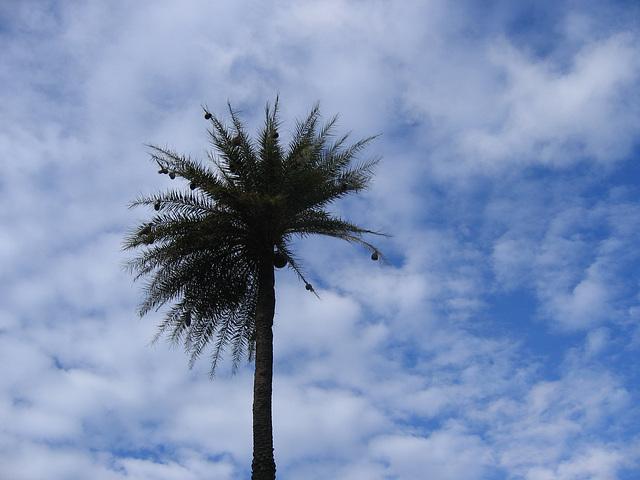 Palmier dans la mer de nuages