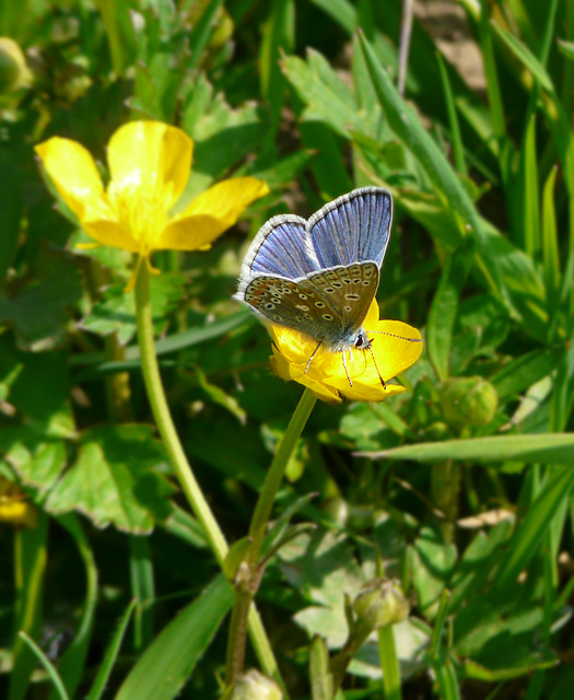 Life in a Buttercup 3