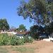 L'arbre et les maisons