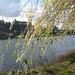 Sonniger Herbsttag an der Elbe bei Pirna