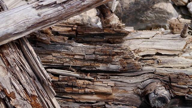 Deadwood at Wapta Falls