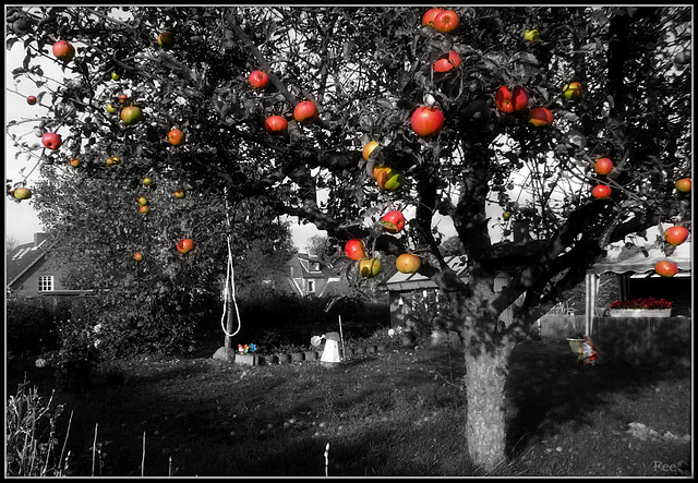 Red apples (Un arbre de Noël)