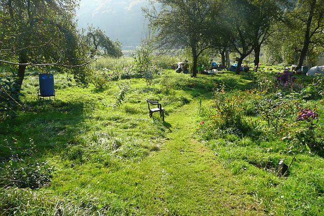 Garten mit Dahlien