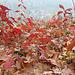 Herbstspaziergang mit Familie Teil 2