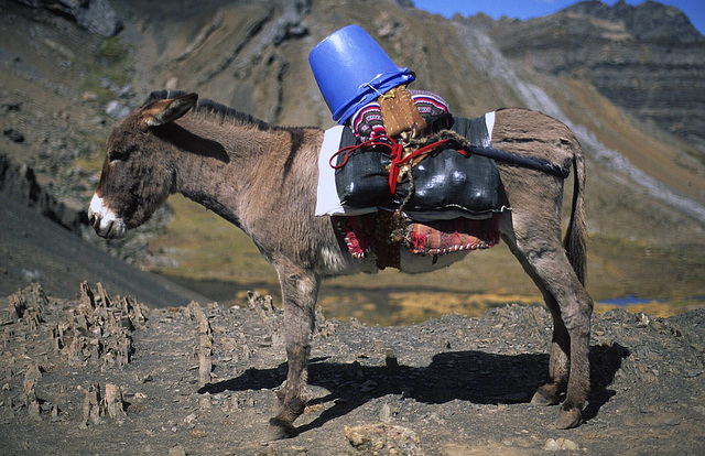 The Bucket Donkey