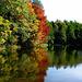 Herbstimmung am Waldweiher