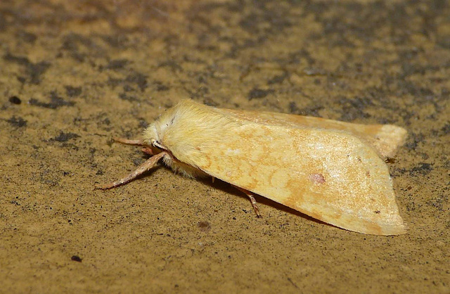 The Sallow -Side