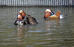 Arundel Wildfowl & Wetland Centre