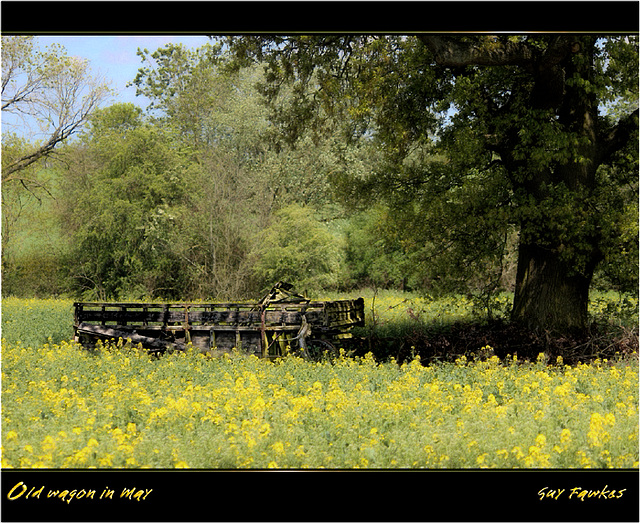 old wagon in May
