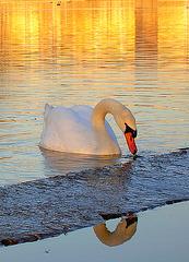 lac de la tuilière Vitrolles