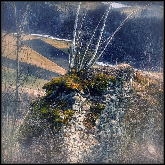 lonesome birches