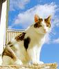 Rocky sonnt sich auf dem Balkon