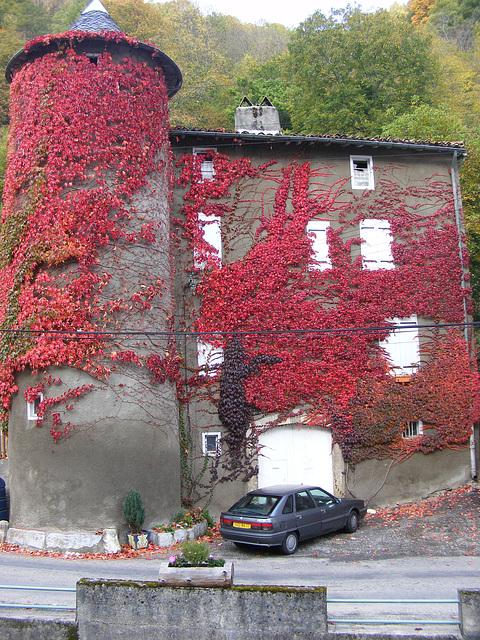 En automne ....toujours par ma fenêtre
