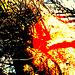 Arboj kaj fajrodiablo (In der neuen Feuerwelt)