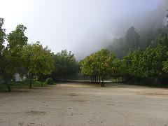 forêt dans la brume au petit matin