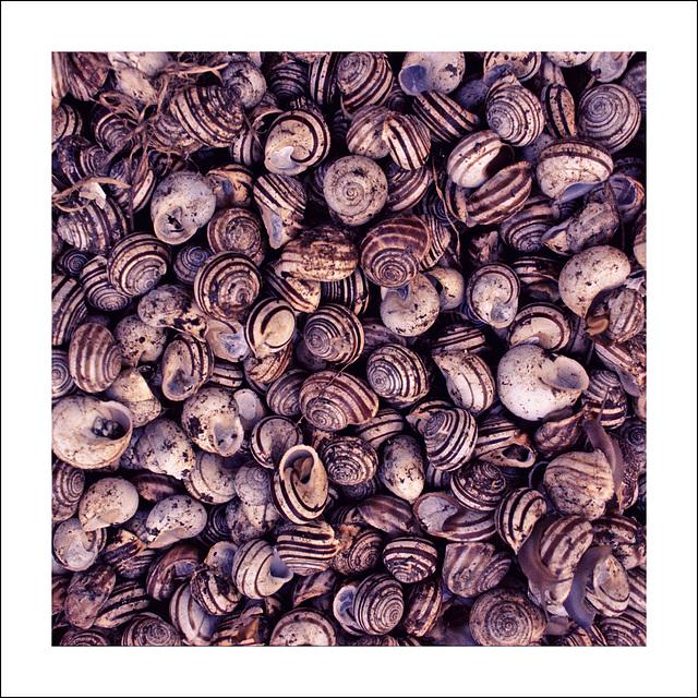 Snails.......