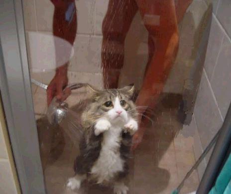 Chat sous la douche