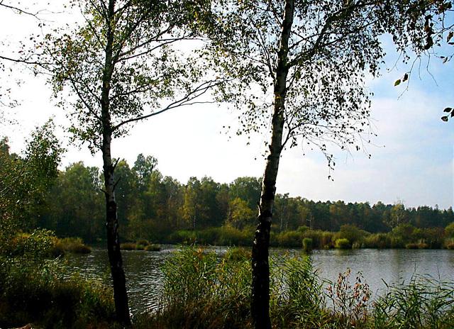 Herbst im Ried