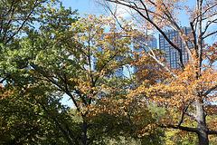 NYC30102008 060
