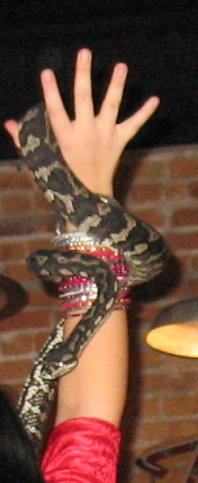 Live bracelet ?
