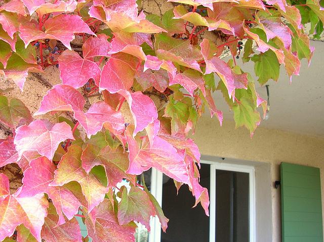 automne Gardanne
