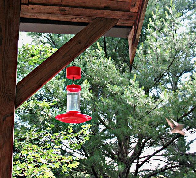 Hummingbird disagreement....