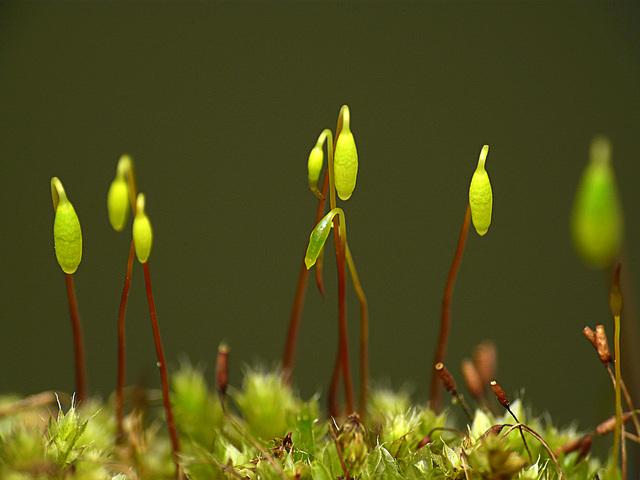 MacroDay Moss