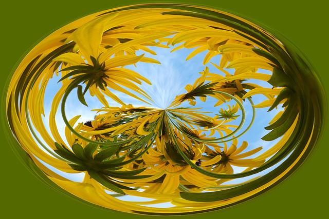 Amazing Circles Daisys