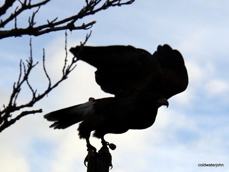 Bea on take-off: Rabbit's nightmare silhouette