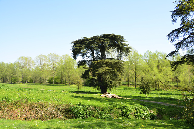 Blenheim Palace – Tree