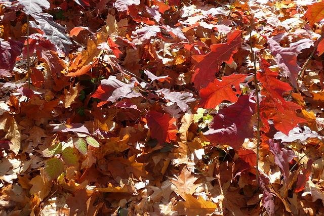 letzte Herbstgrüße