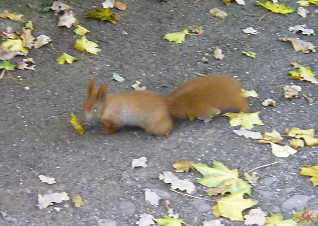 2008-10-08 06 Großer Garten