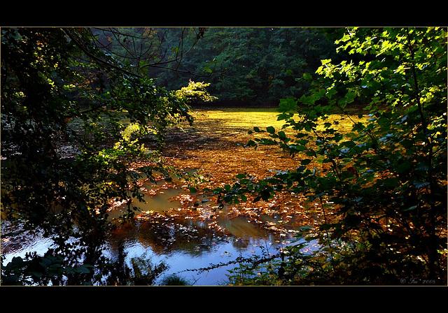 "Herbstzauber or ""palette de couleurs"""