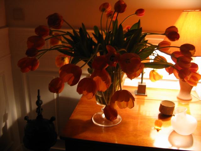 Tulipes vespérales
