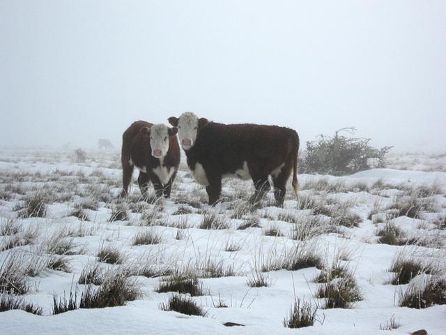 Coyhaique: Invernando en Estancia Baño Nuevo