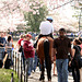 25a.Sunday.NCBF.TidalBasin.SW.WDC.29mar09