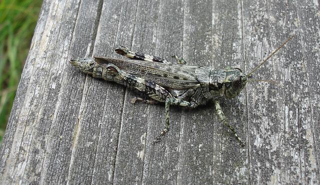 Tarnung camouflage