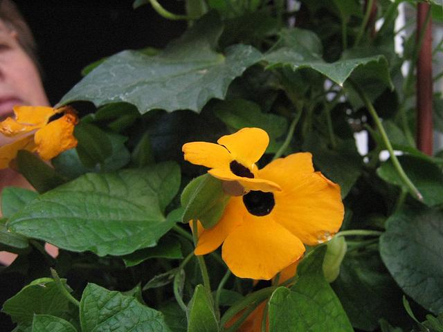 IMG 5121 del jardin de mi madre from my mother´s garden