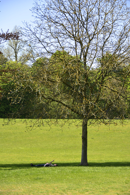 Blenheim Palace – Checking a mobile phone under a tree