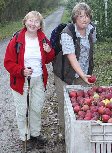 Äpfel zum Saften