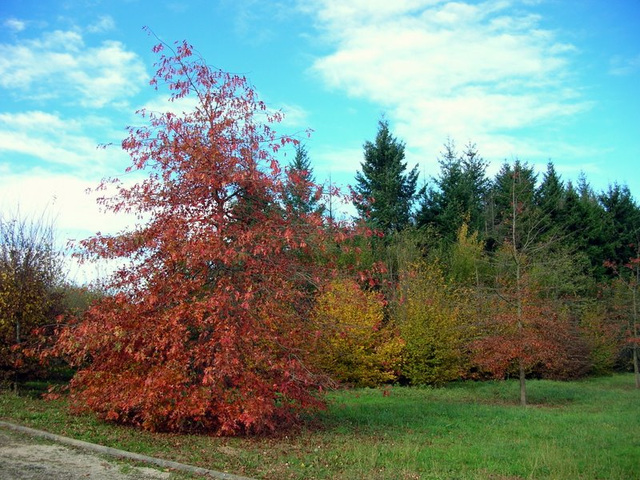 feuillages d'automne 1