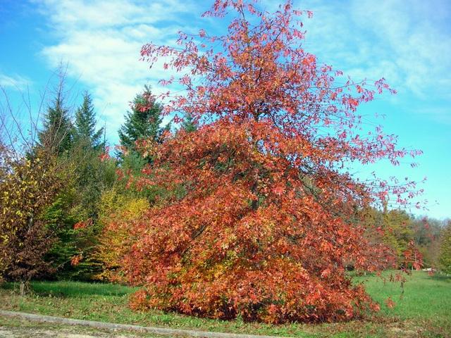feuillages d'automne 2